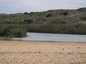 riserva foce del platani (81)